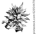 Vintage Antique Line Art Illustration, Drawing or Engraving of Watering of Phrynium Plant in Pot With Can 62054470
