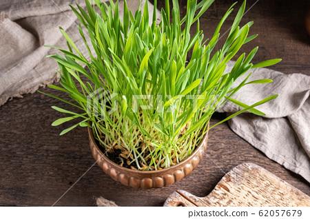 Freshly grown barley grass in a bowl 62057679
