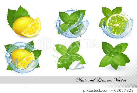 Collection of fresh mint and melissa leaves with 62057825
