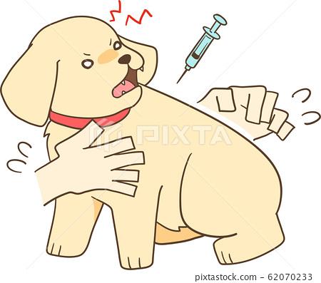金毛幼犬(注射2) 62070233