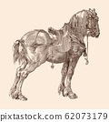 Horse with a saddle. 62073179