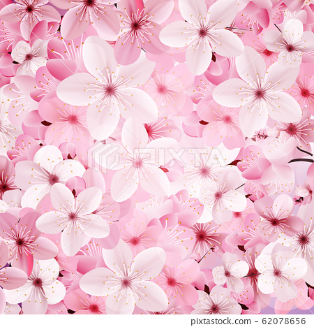 Blossoming pink sakura flowers background. Beautiful print 62078656