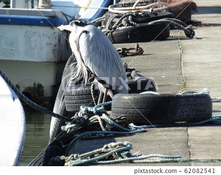 Water heron bird, a heron, seen at the pier in Kasumigaura 62082541