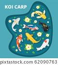 Koi carps vector illustration. Animals asian goldfish multicolored decorative koi carps swim in lake pond among flowering water lilies. Japanese chinese good luck symbol. 62090763
