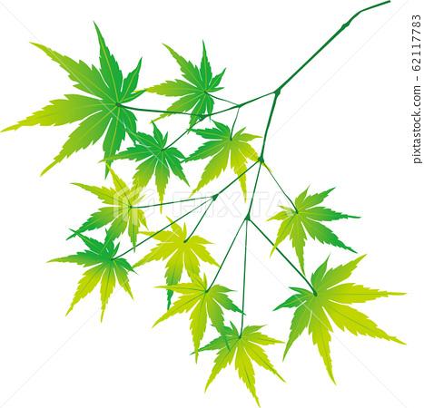 新鮮的綠色楓樹 62117783