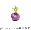 Fresh red onion isolated on white background. Food 62119052