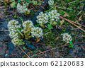 green shoots flowers make their way through the forest floor in spring in the mountains 62120683