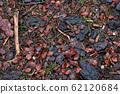Forest floor texture, vintage filter 62120684