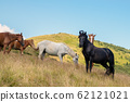 Horses with a foal walking in the mountains on a 62121021