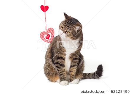 Grey cat and toy heart 62122490