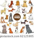 cartoon purebred dog characters large set 62125905