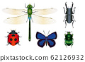 銀杏馬,七星瓢蟲,murasakijijimi,鹿角甲蟲,鹿角甲蟲 62126932