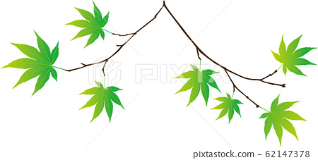 Fresh green leaves and branches 62147378