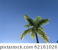 Palm trees and cloudless blue sky 62161026