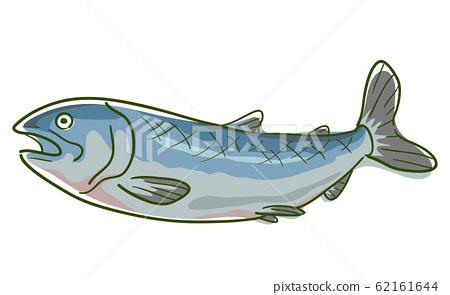 Wild Salmon Superfood Illustration 62161644