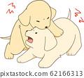 골든 리트리버 강아지 (강아지끼리 싸움) 62166313