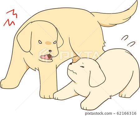 金毛幼犬(成年犬/母犬吠叫於幼犬) 62166316