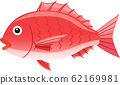 Red snapper 62169981