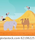 Africa desert landscape background with cartoon flat african animals and birds vector illustration for kids. Egypt hot dunes with camel, elephant, bald eagle and meerkat. 62196225