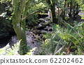 small forrest river and waterfall through trees 62202462