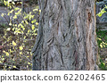 detail of bark of old tree photography 62202465