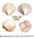 Scallop With Meat In Shell Seafood Set Vector 62216253