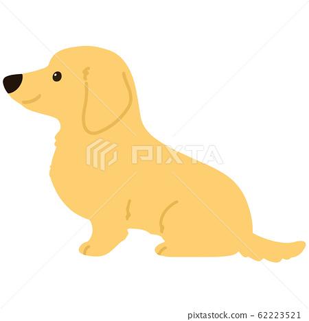 臘腸犬側身坐在沒有輪廓 62223521