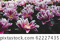 Spring forest close up flowers pink beautiful background 62227435