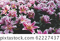 Spring forest close up flowers pink beautiful background 62227437