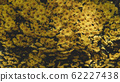 Spring forest close up flowers Yellow beautiful background 62227438