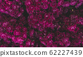 Spring forest close up flowers pink beautiful background 62227439