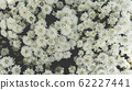 Spring forest close up flowers White beautiful background 62227441