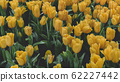 Spring forest close up flowers Yellow beautiful background 62227442