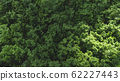 leaves green wall beautiful background 62227443