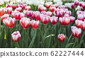 Spring forest close up flowers pink beautiful background 62227444
