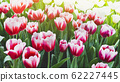 Spring forest close up flowers pink beautiful background 62227445