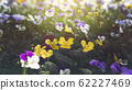 Spring forest close up flowers beautiful background 62227469