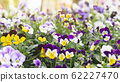 Spring forest close up flowers beautiful background 62227470