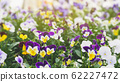 Spring forest close up flowers beautiful background 62227472