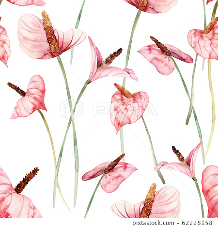 Seamless pattern with anthuriums watercolor 62228158