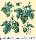 Bunch of grapes set. Berry leaves. Table fruit in vintage style. Hand drawn engraved outline sketch 62233471
