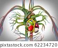 Healthy Heart Food 62234720