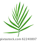 Green leaves of palm tree isolated on white background with clipping path 62240897