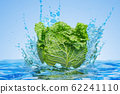 Savoy cabbage with water splashes, 3D rendering 62241110