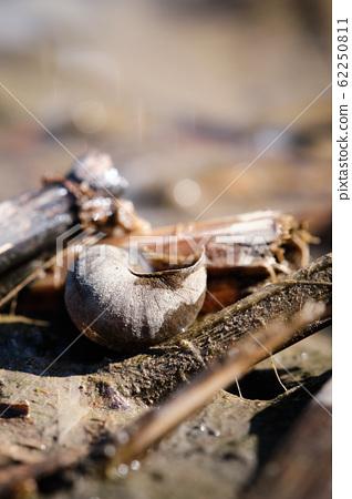 abandoned snail house 62250811