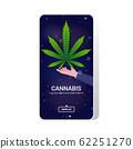 human hand holding cannabis marijuana leaf hemp plant drug consumption concept mobile app smartphone screen copy space 62251270