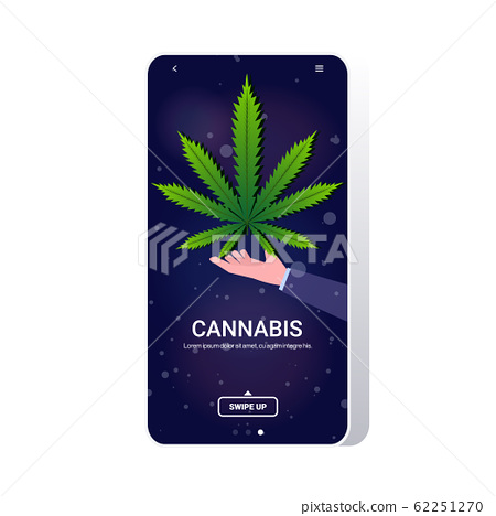 human hand holding cannabis marijuana leaf hemp plant drug consumption concept mobile app smartphone screen copy space 62251270