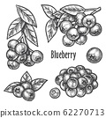 Blueberry hand drawn sketch, forest berry fruits 62270713