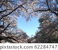 벚꽃 3 62284747
