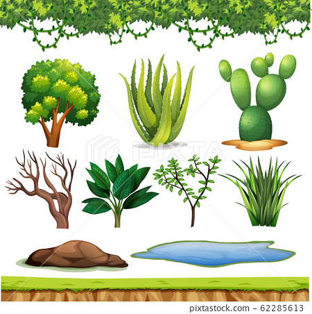 Set of small plants with no flowers on white 62285613